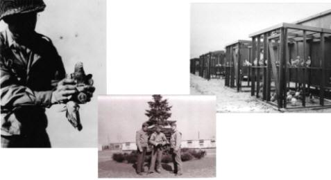 História do pombo correio na 1ª Guerra mundial