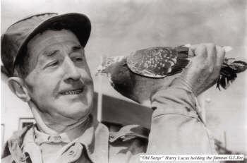Comunicação efetuada na 1ª Guerra mundial com aves domésticas
